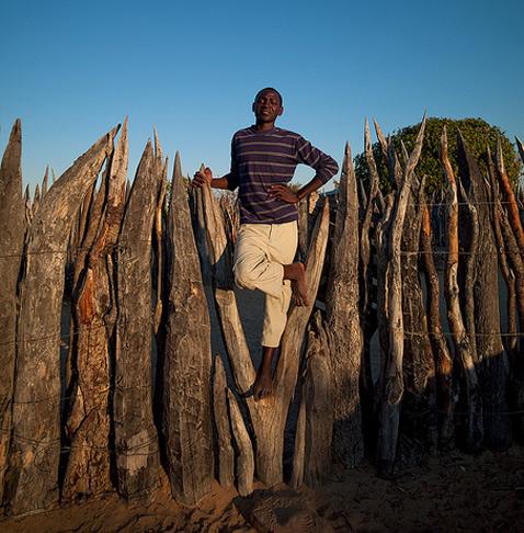 """Защищать подчас надо не только обладателей бивней, но и фермеров, для которых слоны всё равно что вредители: животные сносят заборы, игнорируют громкоговорители и съедают всё подряд, от томатов до картофеля. Учёные предполагают, что нынешнее открытие поможет оградить посевы жителей Африки от """"гигантской напасти"""" (фото Eric Lafforgue)."""