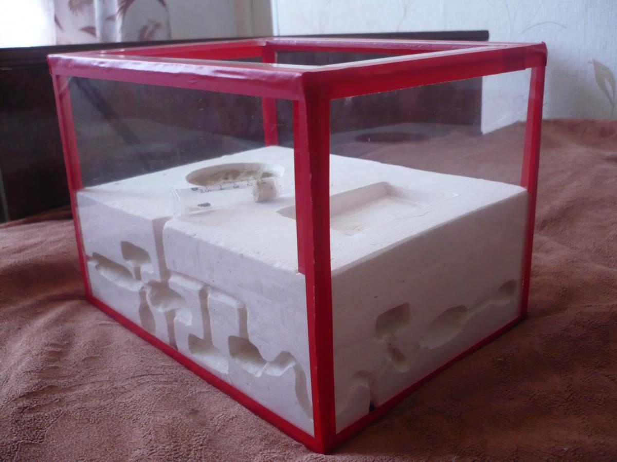Как сделать ферму для муравьёв в домашних условиях