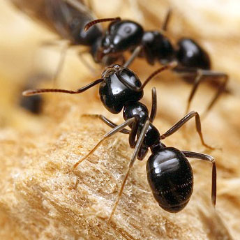 О том как муравей нашел конфету.