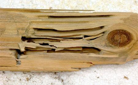 гнездо в разрезе © Jarmo Holopainen