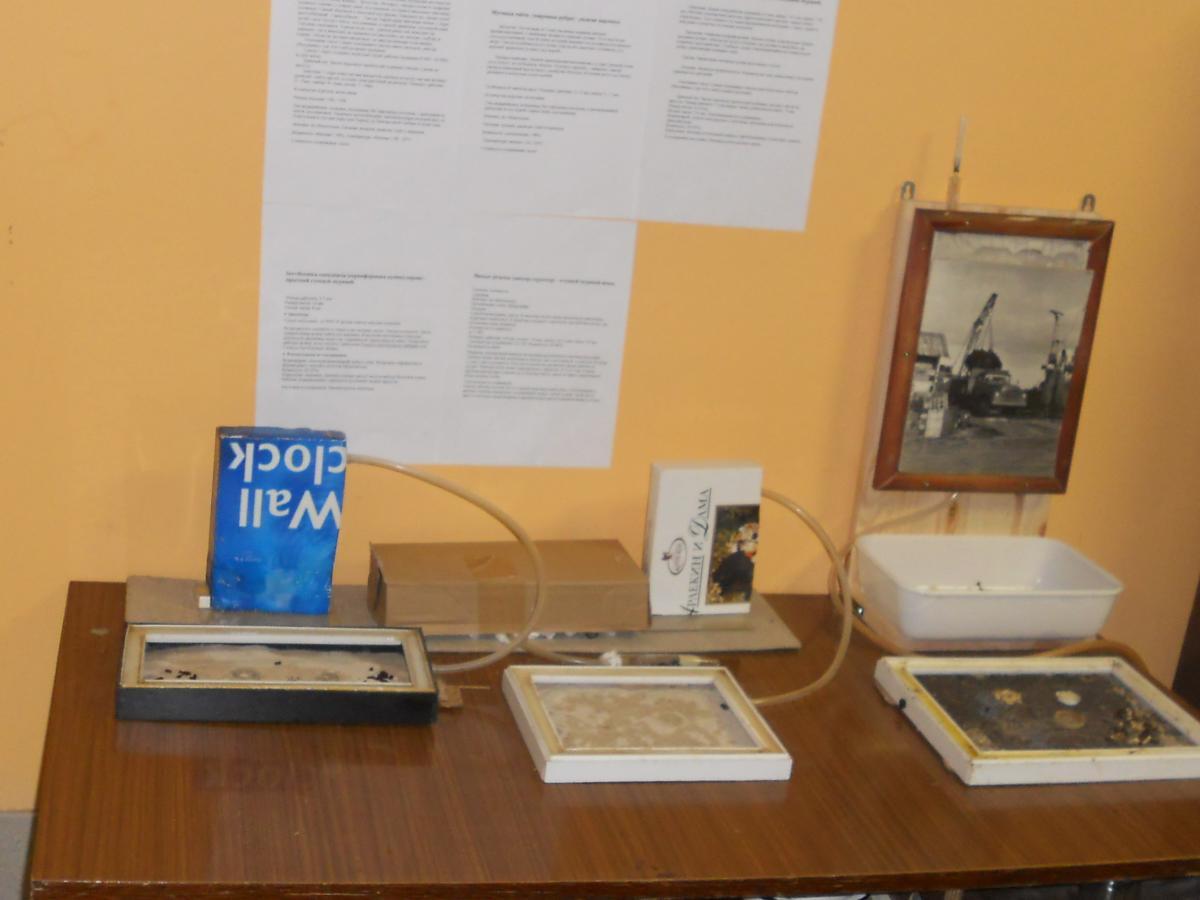 Над столом информация о содержащихся в уголке муравьях.