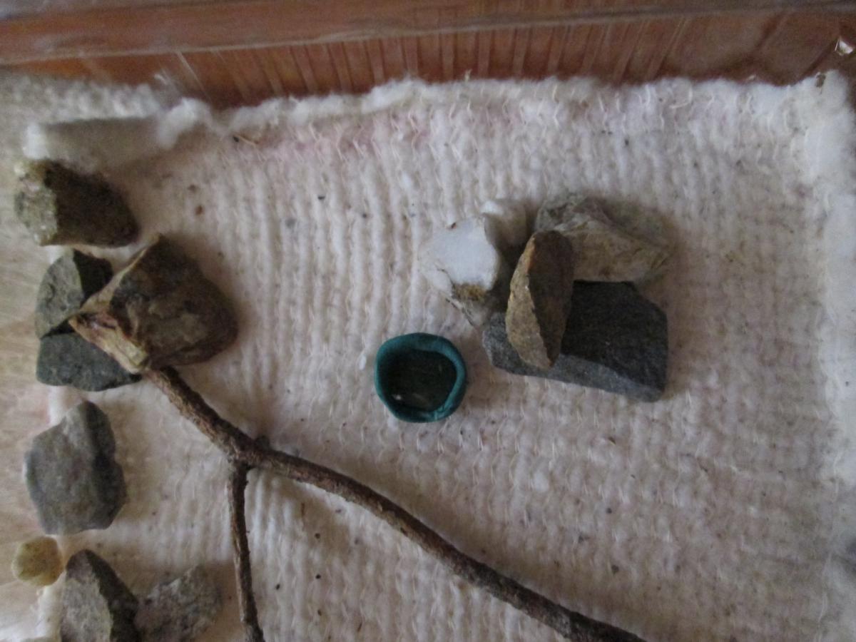 Арена (пищевой контейнер, камешки, веточка сосны и ветошь вместо грунта).