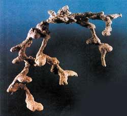 Отливка, показывающая строение муравьиного гнезда. © «Наука и жизнь»