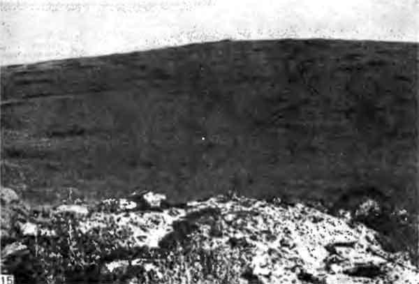 Фото 115. Сильно разбросанные дисковидные холмики Odontotermes sp. в саванне близ Каджиадо. Почва в промежутках между холмиками — глина, изрезанная глубокими трещинами, с небольшими пятнами растительности; на холмиках эта глина рыхлая и ломкая и покрыта густой дерновиной. [J.P.E.C. Darlington.]