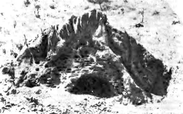 Фото 117. Гнездовой холмик в разрезе. Можно видеть три зоны. В центральной зоне обычно располагаются камеры, в которых выращивается расплод. Ее окружают камеры для выращивания грибов (см. также фото 101 и 102). В самой наружной зоне находятся вентиляционные ходы. [фото J.P.E.C Darlington.]