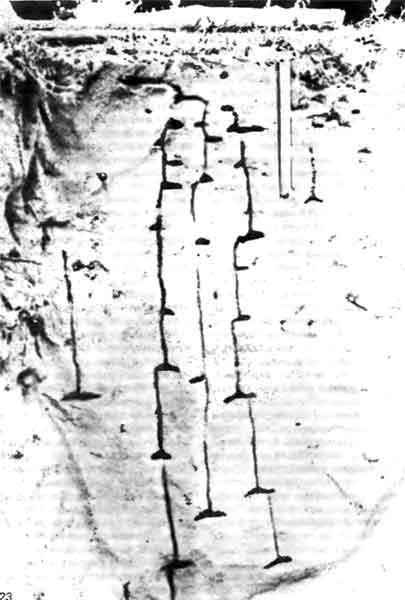 Фото 123. Гнездо Acantholepis custodiens, вырытое в земле, — превосходный пример камер, находящихся на разных уровнях и соединенных вертикальными стволами, что позволяет муравьям выбирать уровень с оптимальной для их расплода температурой. (М.О. Way, 1953.)