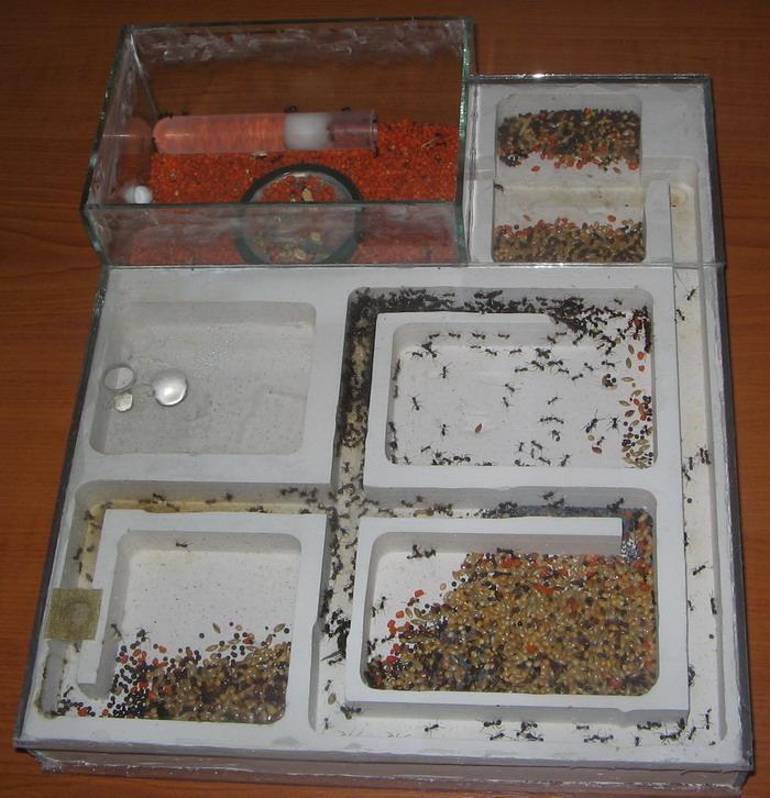Как сделать ферму муравьёв 490